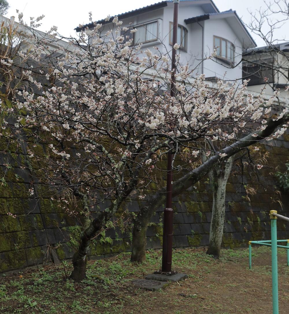 小雨のお散歩♪_b0275998_11332881.jpg