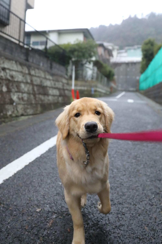 小雨のお散歩♪_b0275998_11333567.jpg