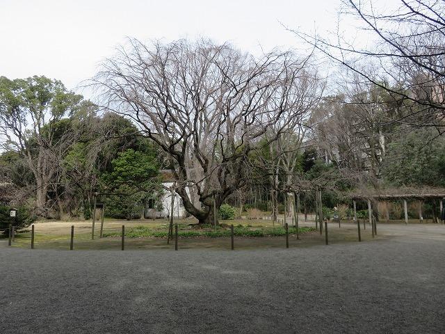 六義園①(新江戸百景めぐり61-1)_c0187004_21254280.jpg