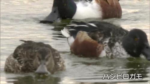 平城宮跡の豊かな自然がNHKテレビで紹介されました_c0277428_00285063.png