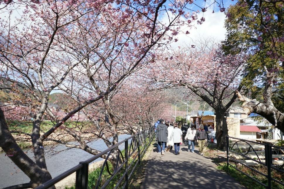 春の伊豆へ・河津桜祭り_c0226331_13085236.jpg