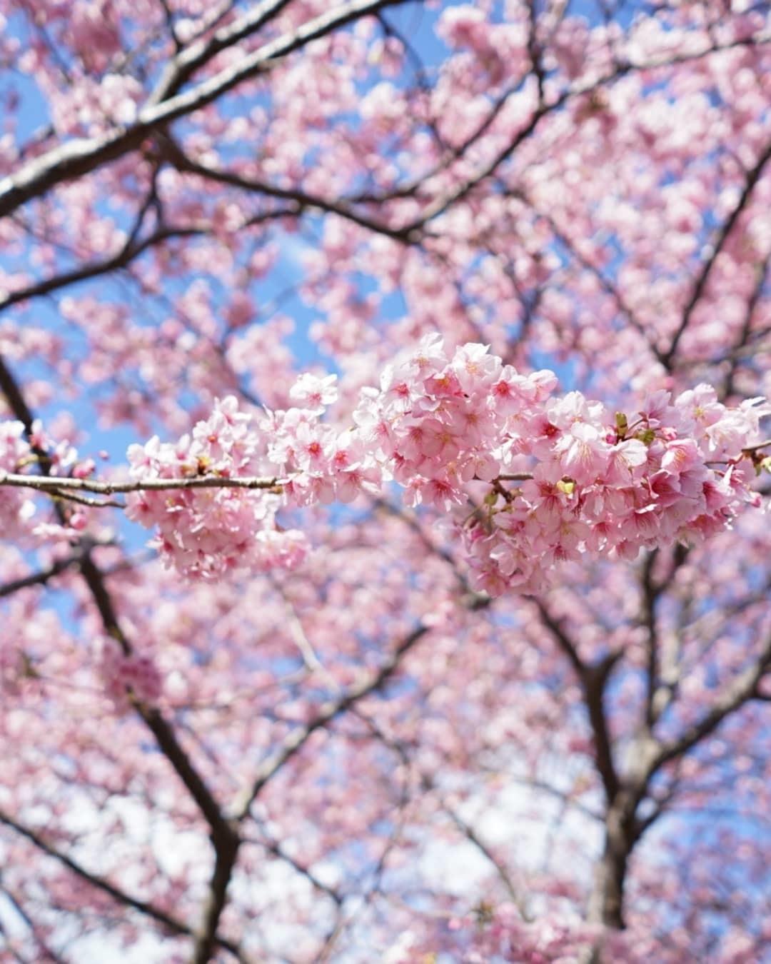 春の伊豆へ・河津桜祭り_c0226331_13085370.jpg