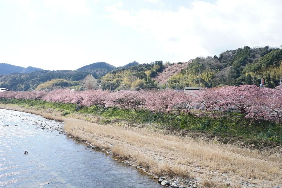 春の伊豆へ・河津桜祭り_c0226331_13093669.jpg