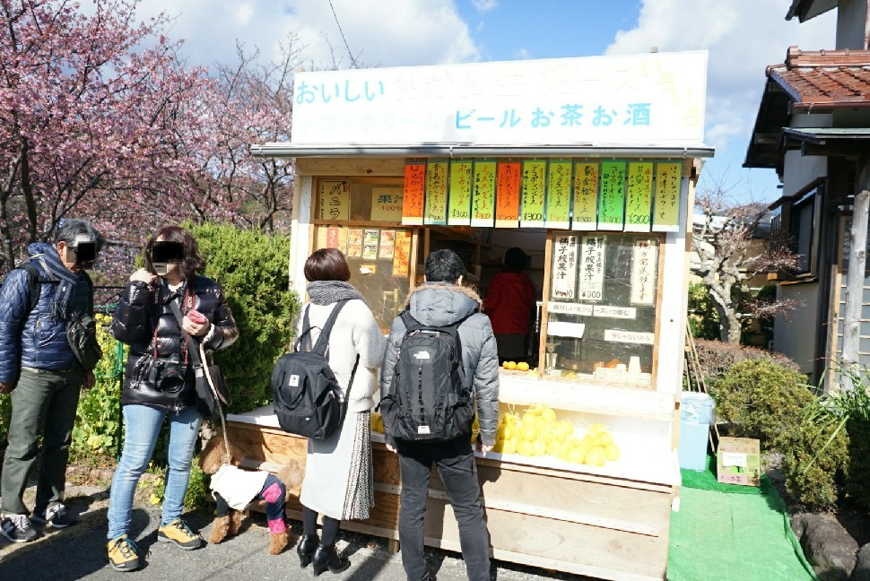 春の伊豆へ・河津桜祭り_c0226331_13174696.jpg
