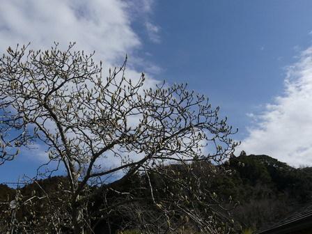 北風、冬に戻りました。でも、、。_a0123836_16371014.jpg