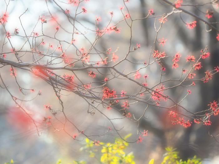 ワインレッドの美しいヒクイナ Ⅱ_d0290240_17413437.jpg