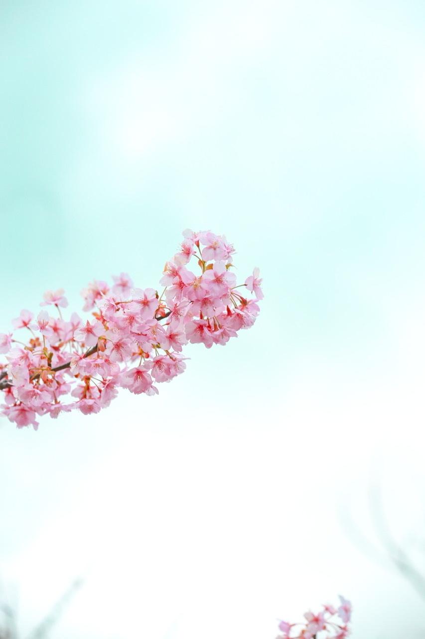 桜ドーナツ ロリポップ_d0034447_00280268.jpeg