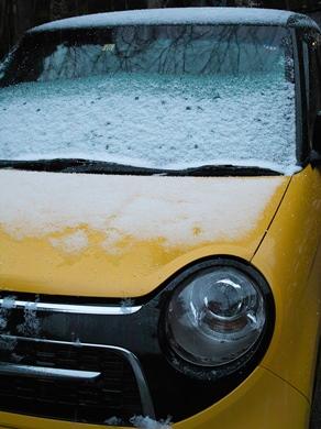 吹雪の散歩・・・新型コロナウイルスで自粛を_d0005250_1710062.jpg