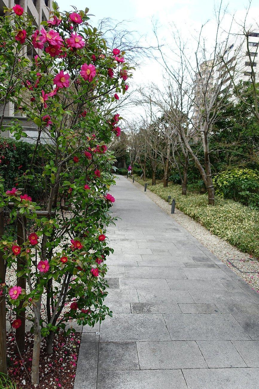 グランフロント大阪 ザ・ガーデン_c0112559_08280451.jpg