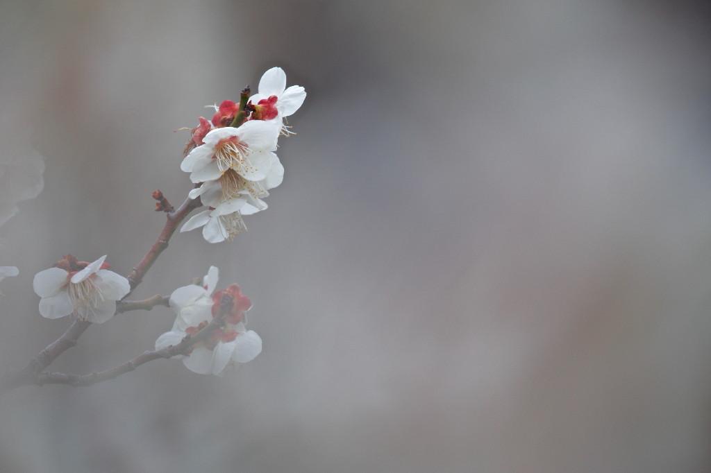 梅の花_e0071967_14283748.jpg