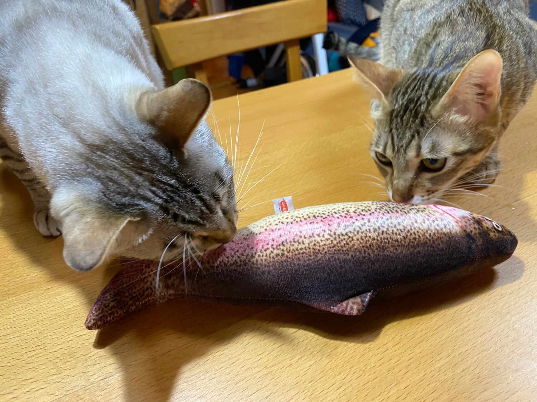 猫ネタばかりでスミマセン…。_f0232994_10120598.jpg