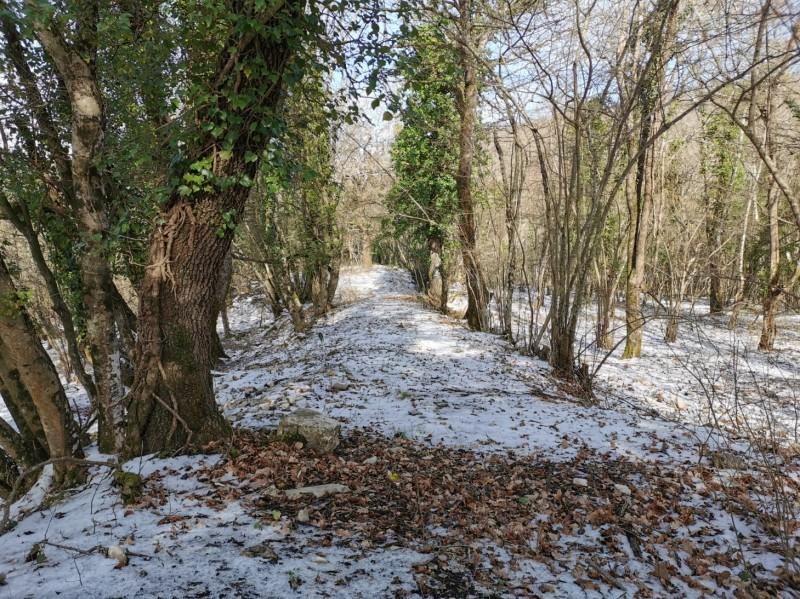 雪が降りました_f0106597_20352965.jpg