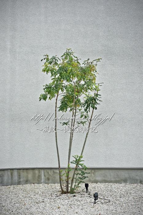 孤独な常葉樹。_f0235723_16360714.jpg