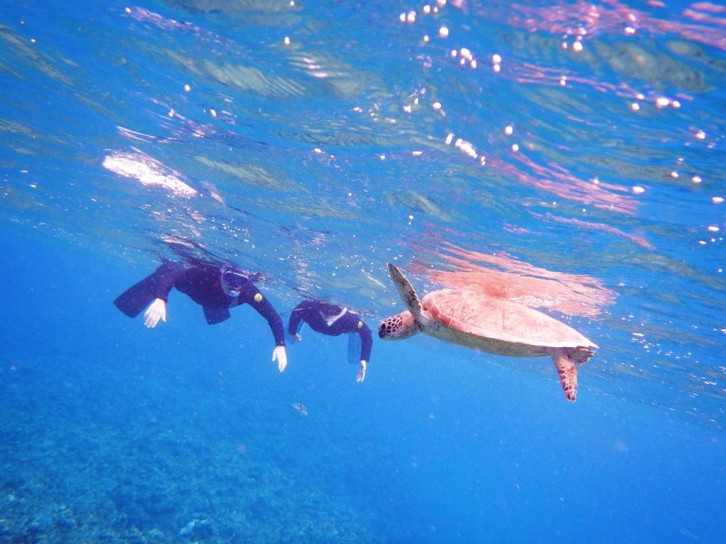 ウミガメが目の前にっ\(^o^)/_a0189838_15551685.jpg