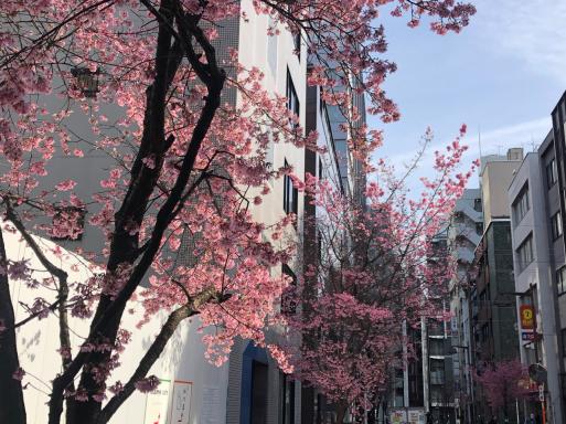 ビルの陰になっていまひとついい写真が撮れないけど、春は感じる。_d0057843_15101924.jpg