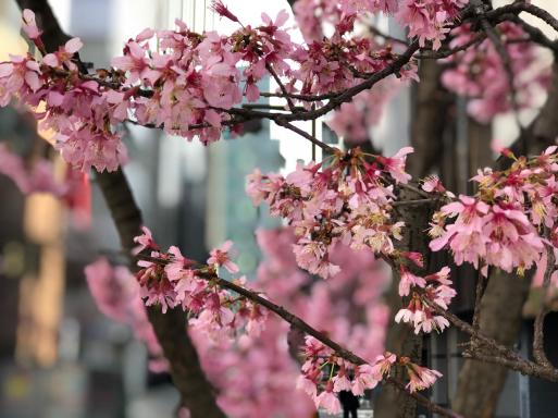 ビルの陰になっていまひとついい写真が撮れないけど、春は感じる。_d0057843_15102821.jpg