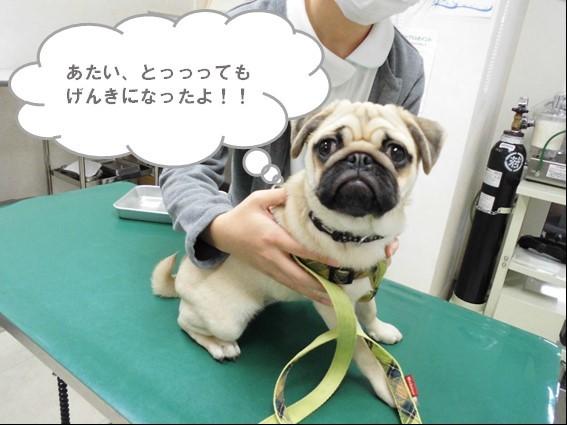 【わさびちゃん、足が…!!】_b0059154_12054417.jpg