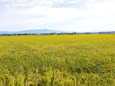 砂田米 熊本県菊池市七城町『砂田のこだわりれんげ米』令和2年もれんげを有機肥料にする土つくりです_a0254656_16494853.jpg