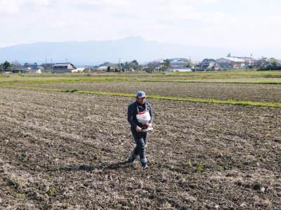 砂田米 熊本県菊池市七城町『砂田のこだわりれんげ米』令和2年もれんげを有機肥料にする土つくりです_a0254656_16595617.jpg