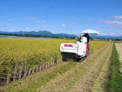 砂田米 熊本県菊池市七城町『砂田のこだわりれんげ米』令和2年もれんげを有機肥料にする土つくりです_a0254656_17025518.jpg