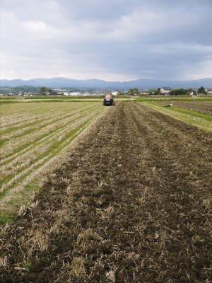 砂田米 熊本県菊池市七城町『砂田のこだわりれんげ米』令和2年もれんげを有機肥料にする土つくりです_a0254656_17121840.jpg