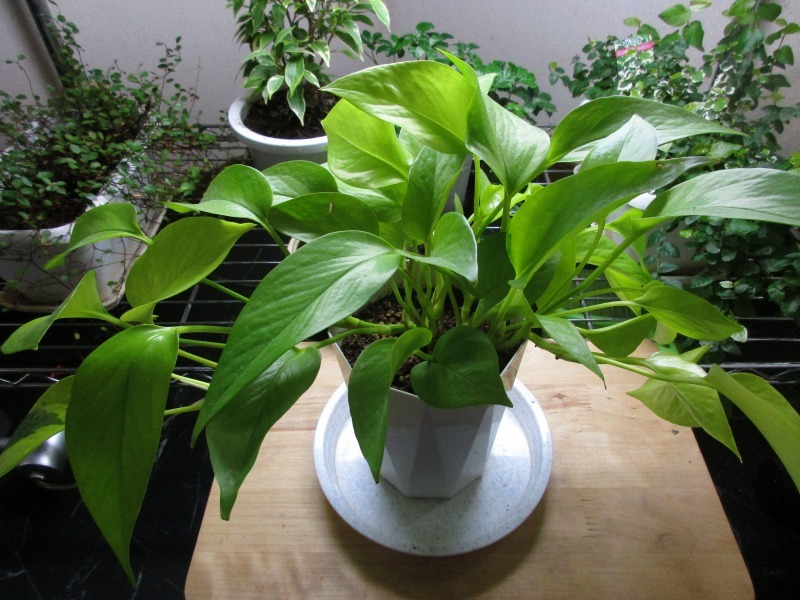 植物「たまにはゲーム以外の事を書く」_b0362459_17051823.jpg