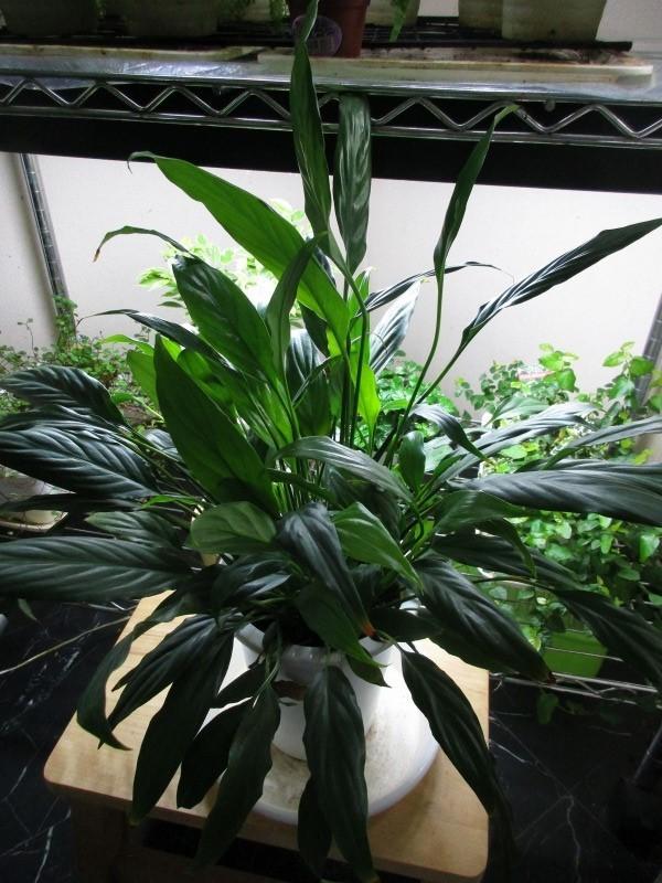 植物「たまにはゲーム以外の事を書く」_b0362459_17310218.jpg