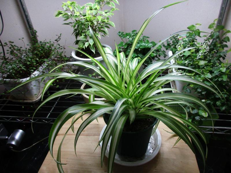 植物「たまにはゲーム以外の事を書く」_b0362459_17324891.jpg