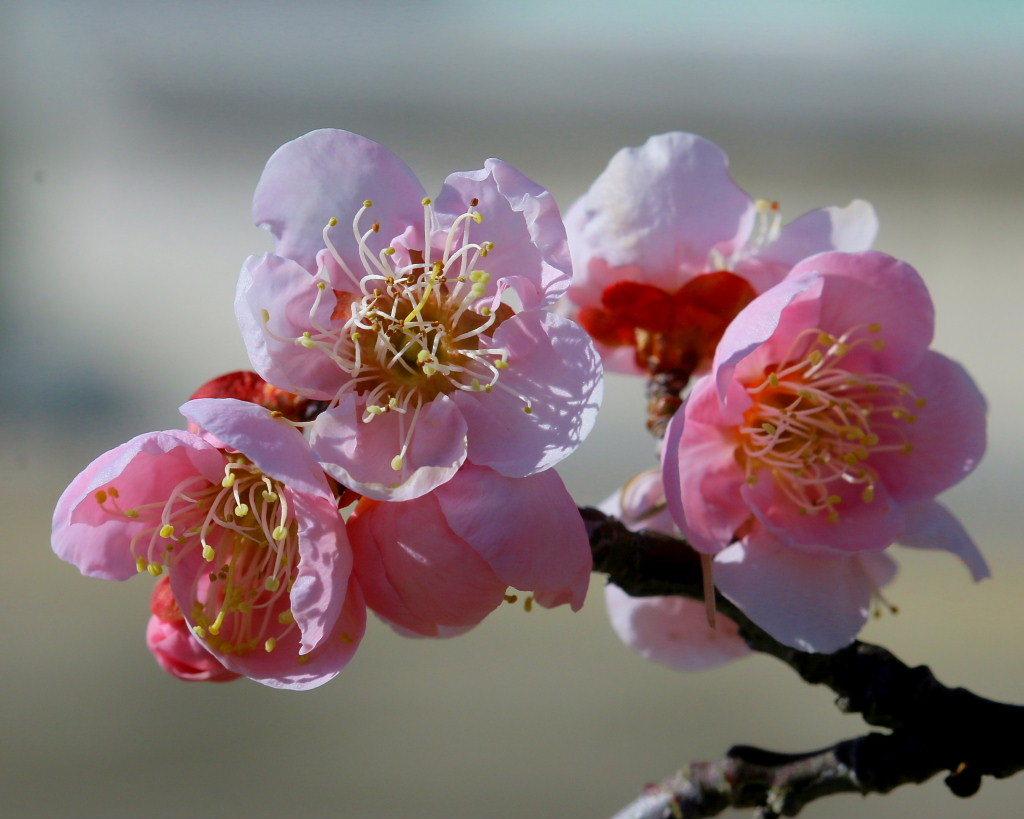 マクロレンズで春の花々_c0305565_17321230.jpg