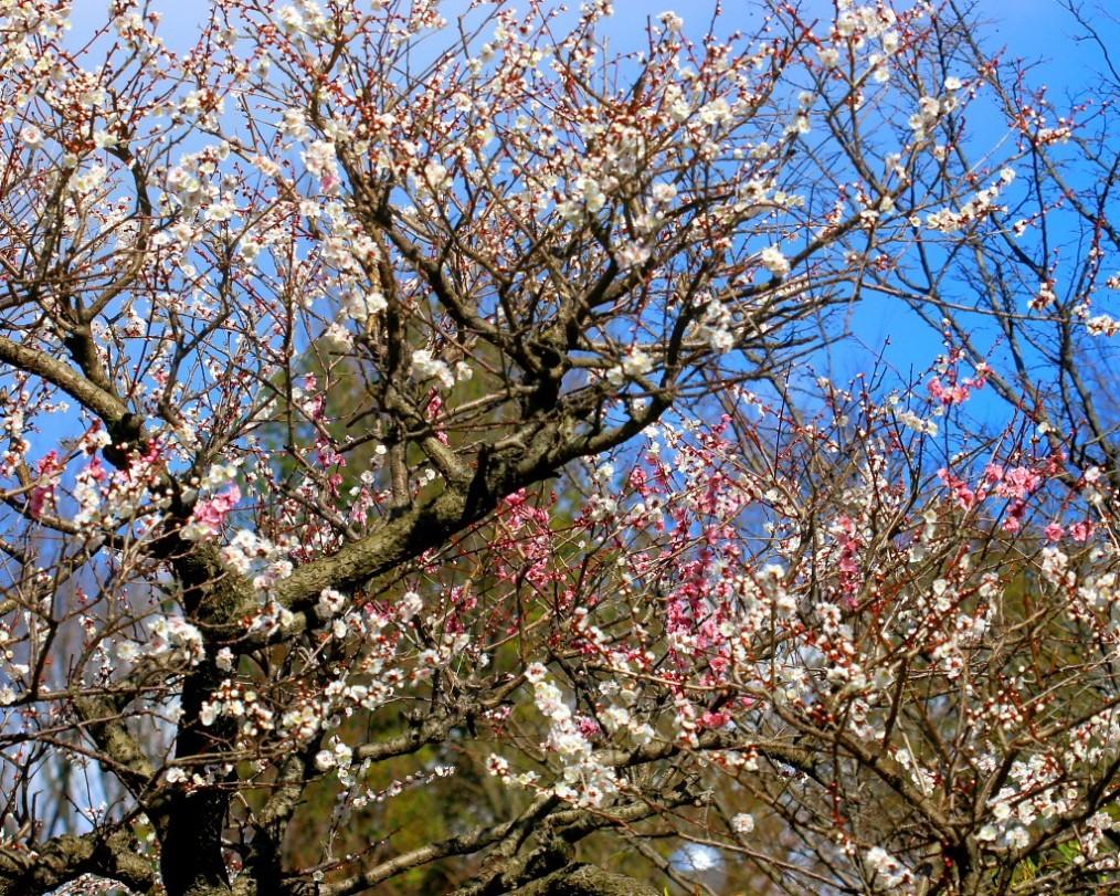 マクロレンズで春の花々_c0305565_17325159.jpg
