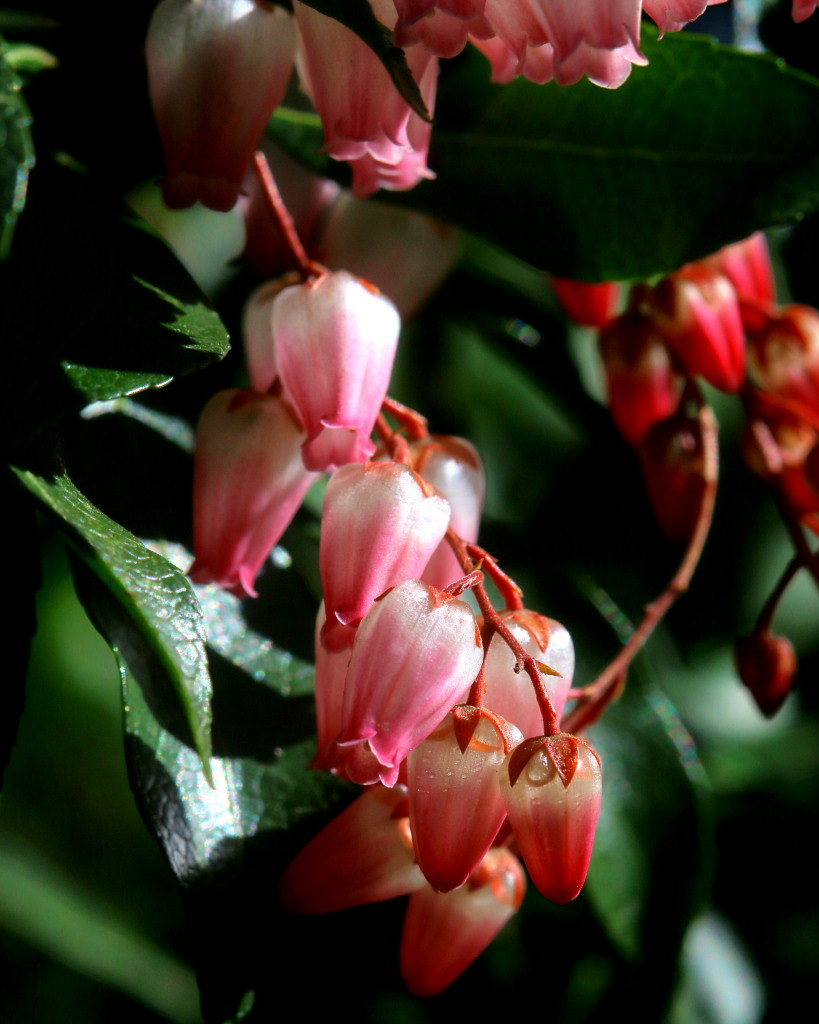 マクロレンズで春の花々_c0305565_17334056.jpg