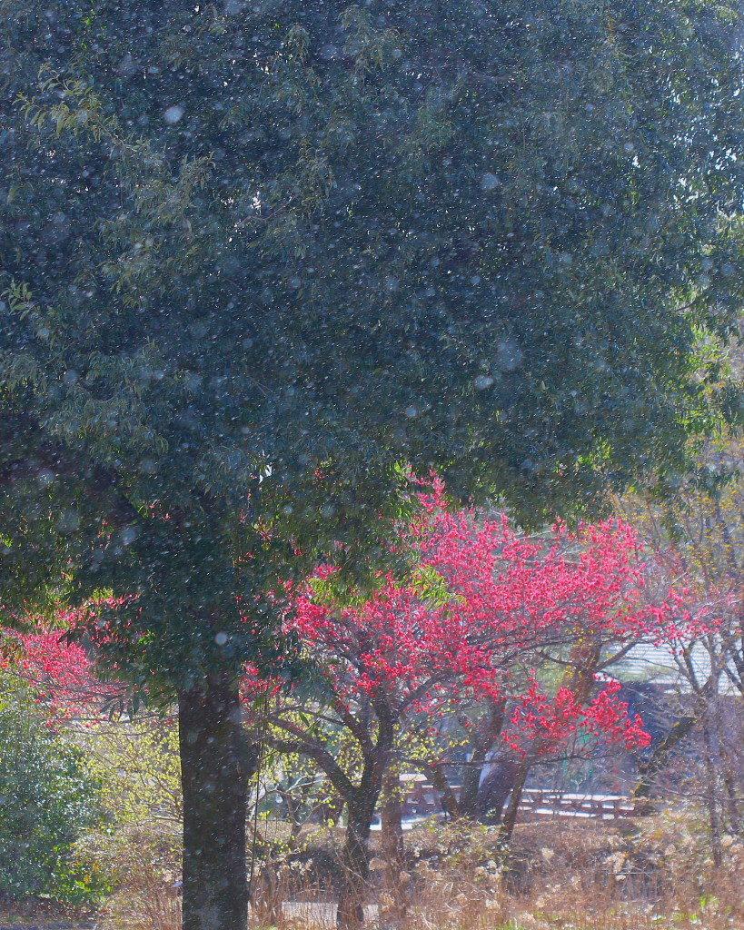 マクロレンズで春の花々_c0305565_17335674.jpg