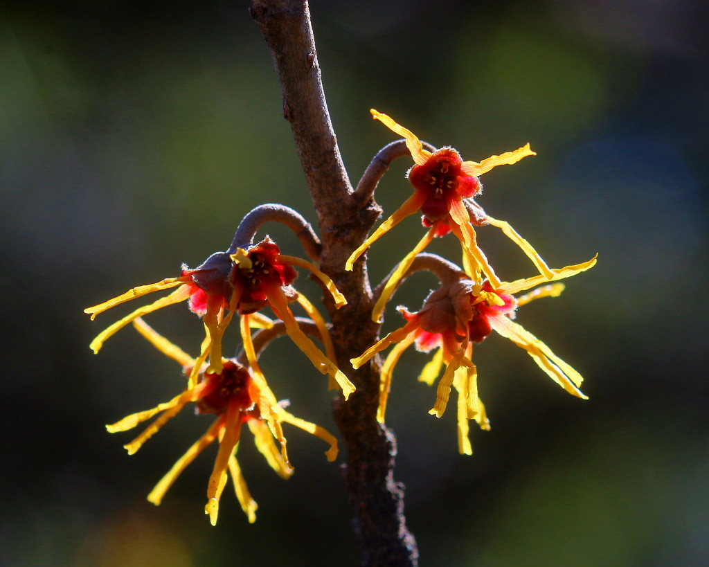 マクロレンズで春の花々_c0305565_17341857.jpg