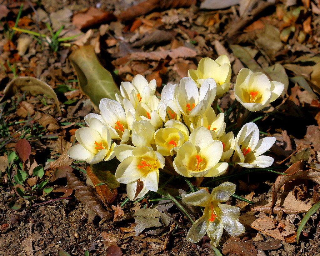 マクロレンズで春の花々_c0305565_17343888.jpg