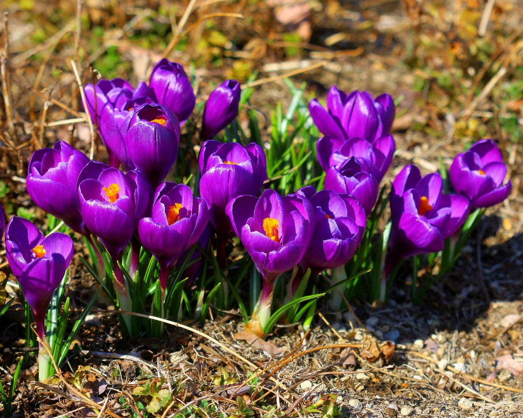マクロレンズで春の花々_c0305565_17351292.jpg