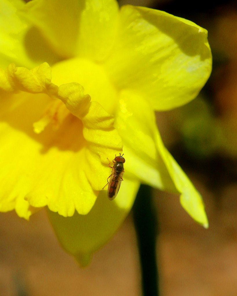 マクロレンズで春の花々_c0305565_17353523.jpg