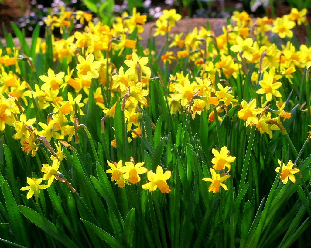 マクロレンズで春の花々_c0305565_17354969.jpg