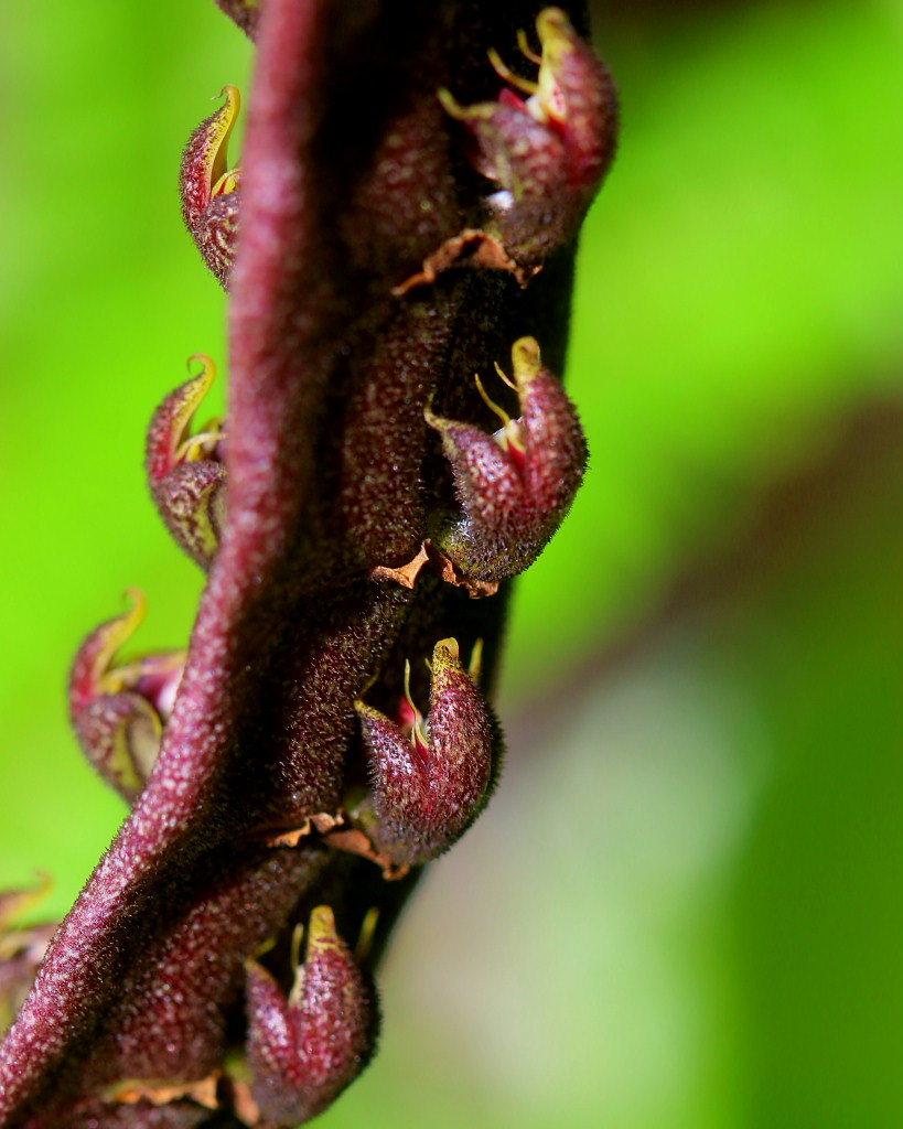 マクロレンズで春の花々_c0305565_17361352.jpg
