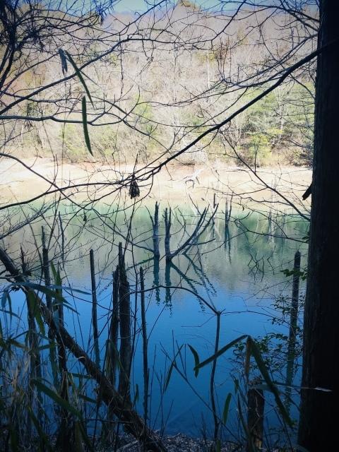 【200228:金】+++海上の森、一人散歩アゲイン+++_f0327767_15030315.jpg