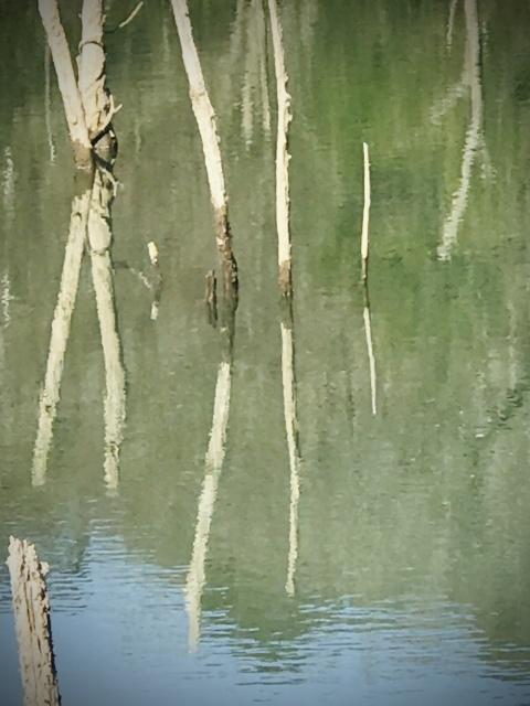 【200228:金】+++海上の森、一人散歩アゲイン+++_f0327767_15032591.jpg