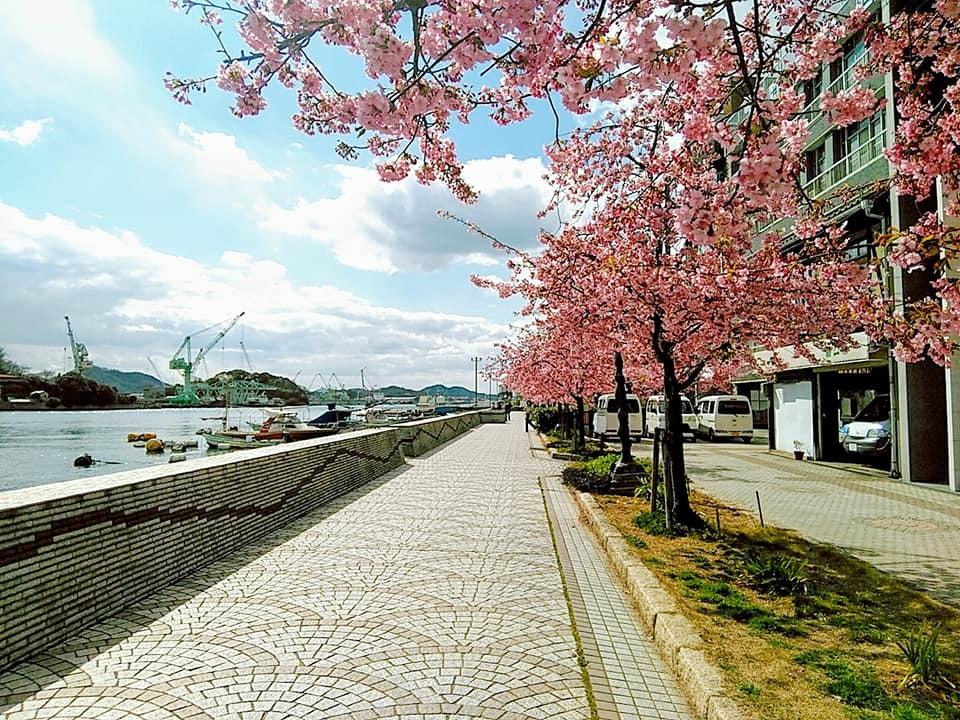桜が。。。!!!!!_d0144077_14283332.jpg