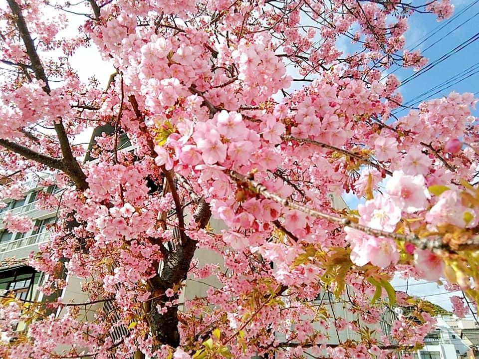 桜が。。。!!!!!_d0144077_14283805.jpg