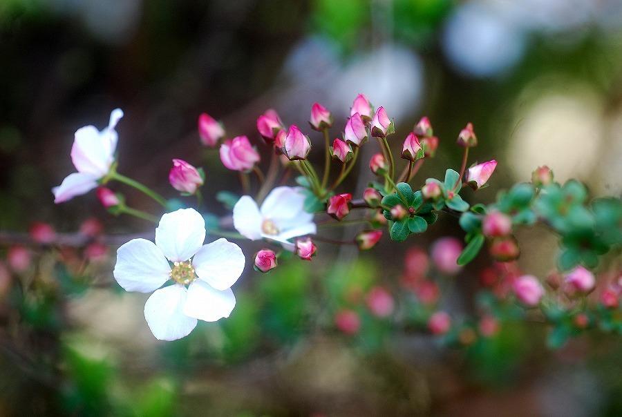 狭庭の春_c0187781_16021136.jpg