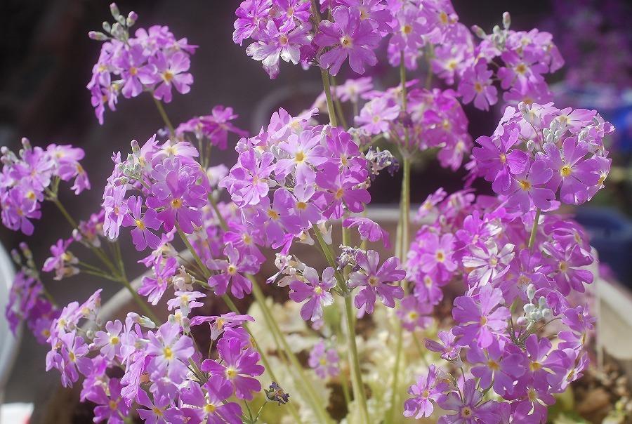 狭庭の春_c0187781_16122259.jpg