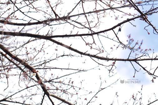 裏の梅がどんどん開花しています❤(#^^#)_c0140599_19125657.jpg