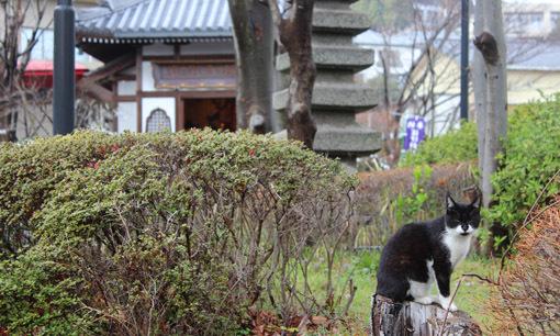 温泉と猫は似合うね☆別府・鉄輪温泉の路地裏とまったりな猫たち_a0329820_17531852.jpg