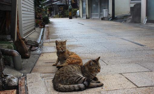 温泉と猫は似合うね☆別府・鉄輪温泉の路地裏とまったりな猫たち_a0329820_17532179.jpg