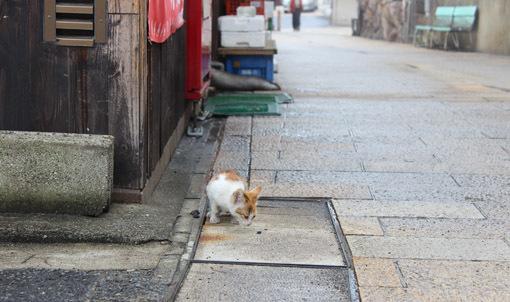 温泉と猫は似合うね☆別府・鉄輪温泉の路地裏とまったりな猫たち_a0329820_17532592.jpg