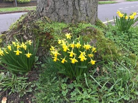 春遠からず_f0123922_07254985.jpeg