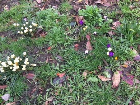 春遠からず_f0123922_07292494.jpeg